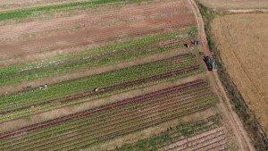 AerialProductions.es Agricultura con drone