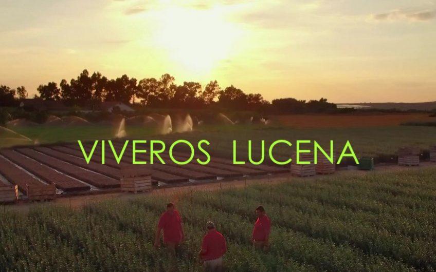 Vídeo corporativo de empresa para Viveros Lucena