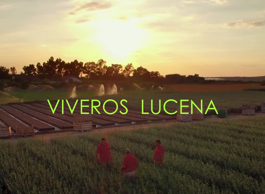 VIVEROS LUCENA AERIALPRODUCTIONS.ES VIDEO DRONE EMPRESA