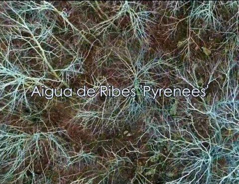 Aigua de Ribes 'Pyrenees'